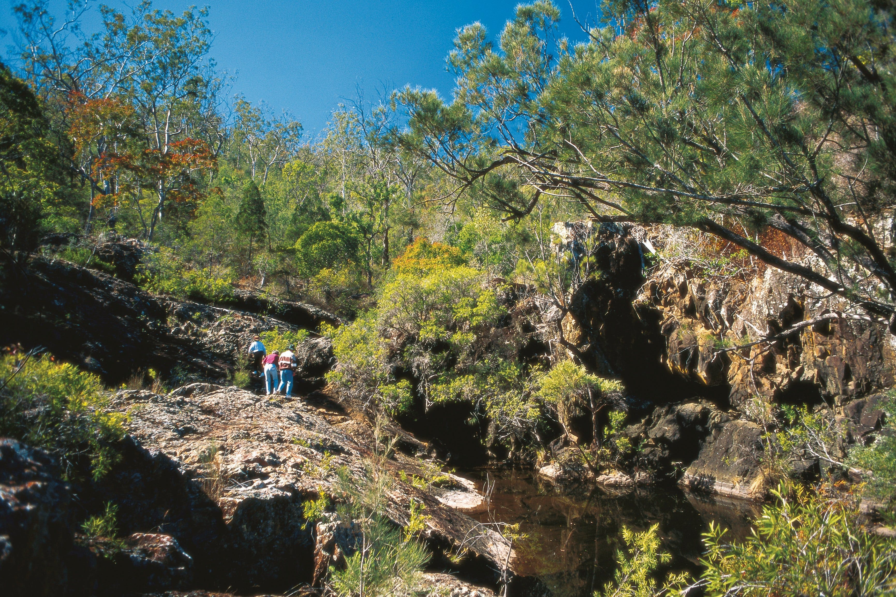 Kroombit Tops National Park - Tourism Brisbane