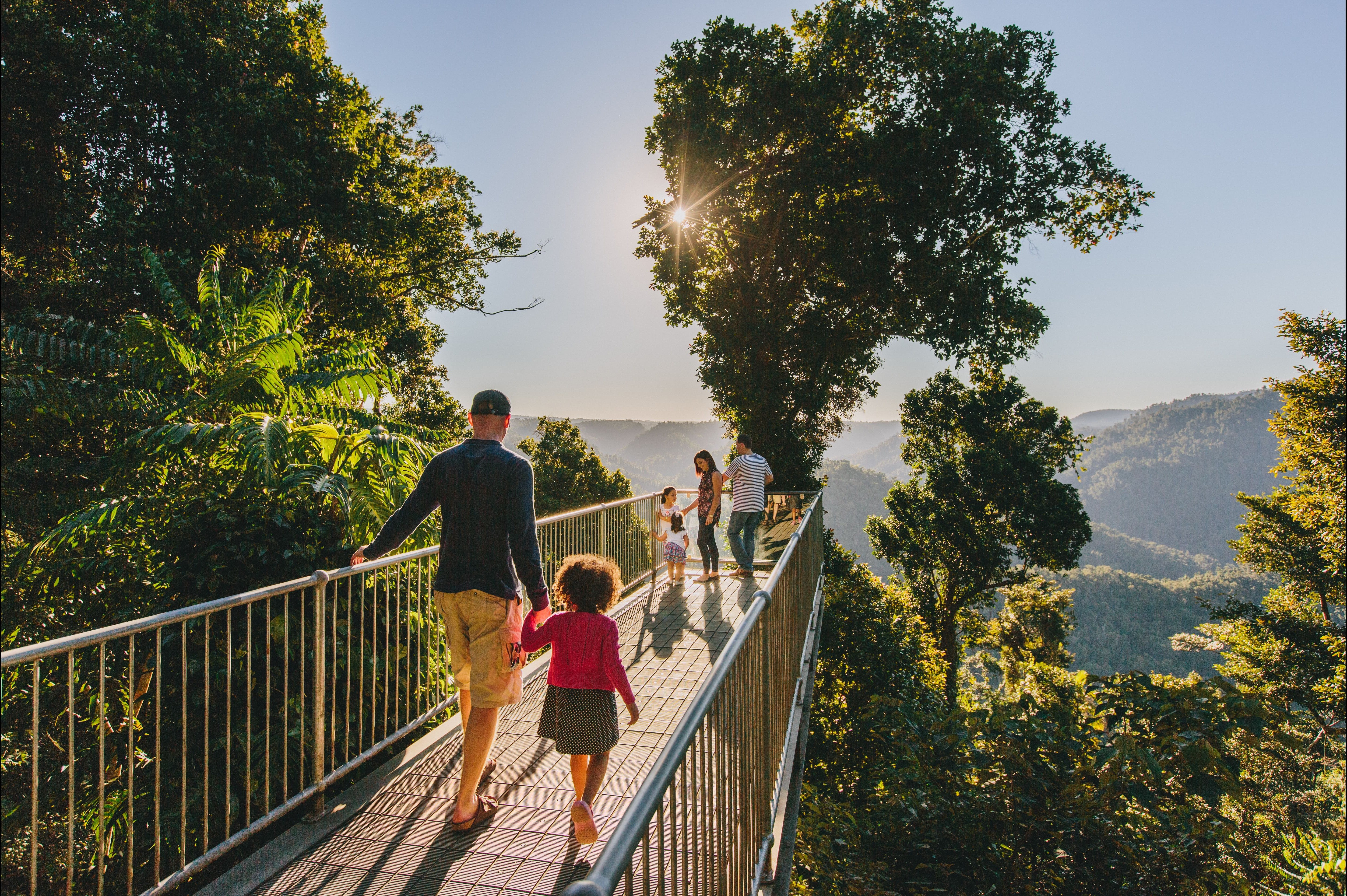 Mamu Tropical Skywalk - Tourism Brisbane