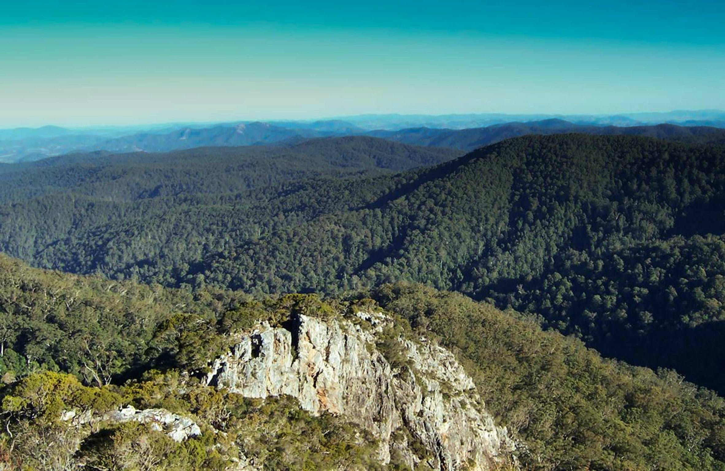Tapin Tops National Park - Tourism Brisbane