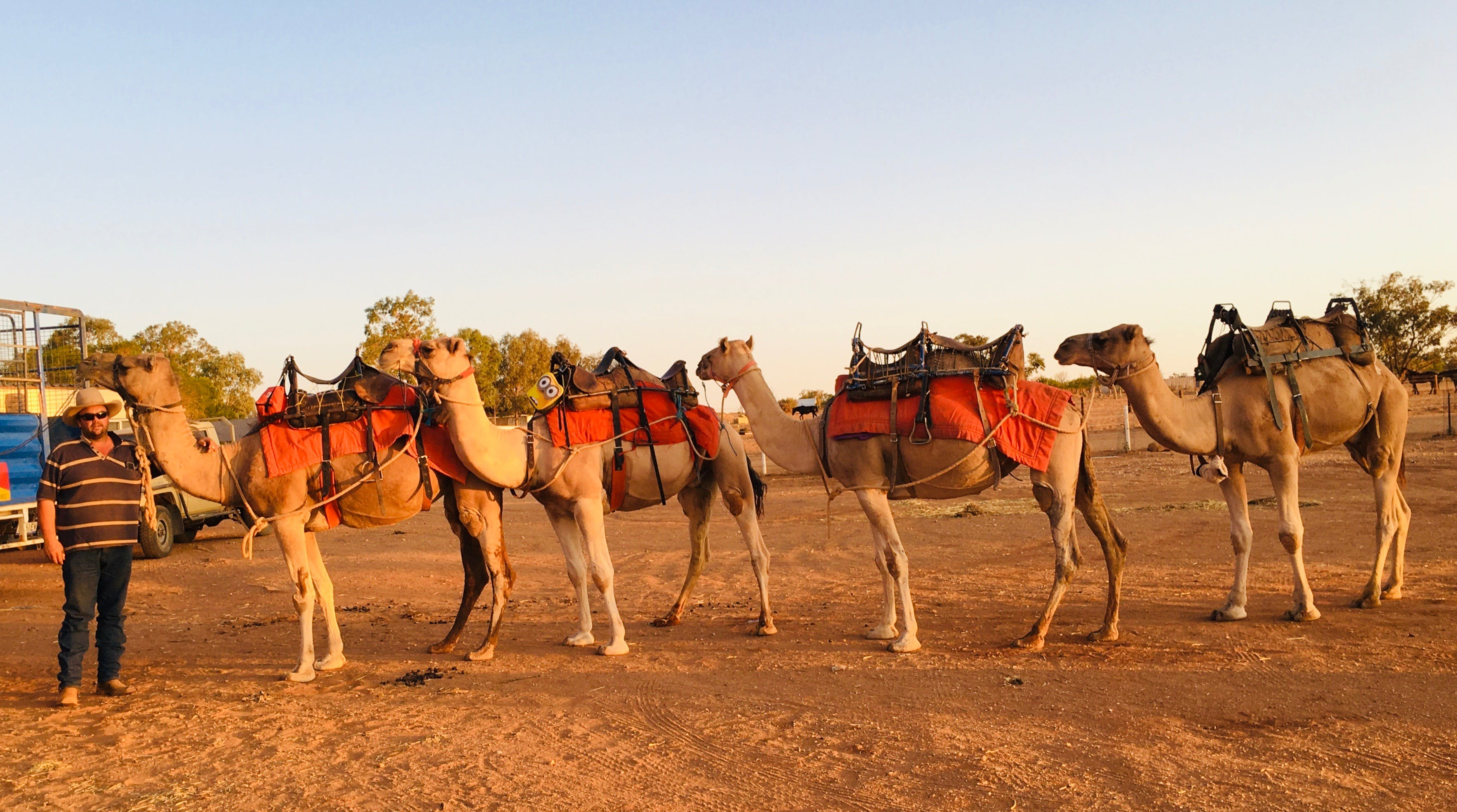 Broken Hill Camels - Tourism Brisbane