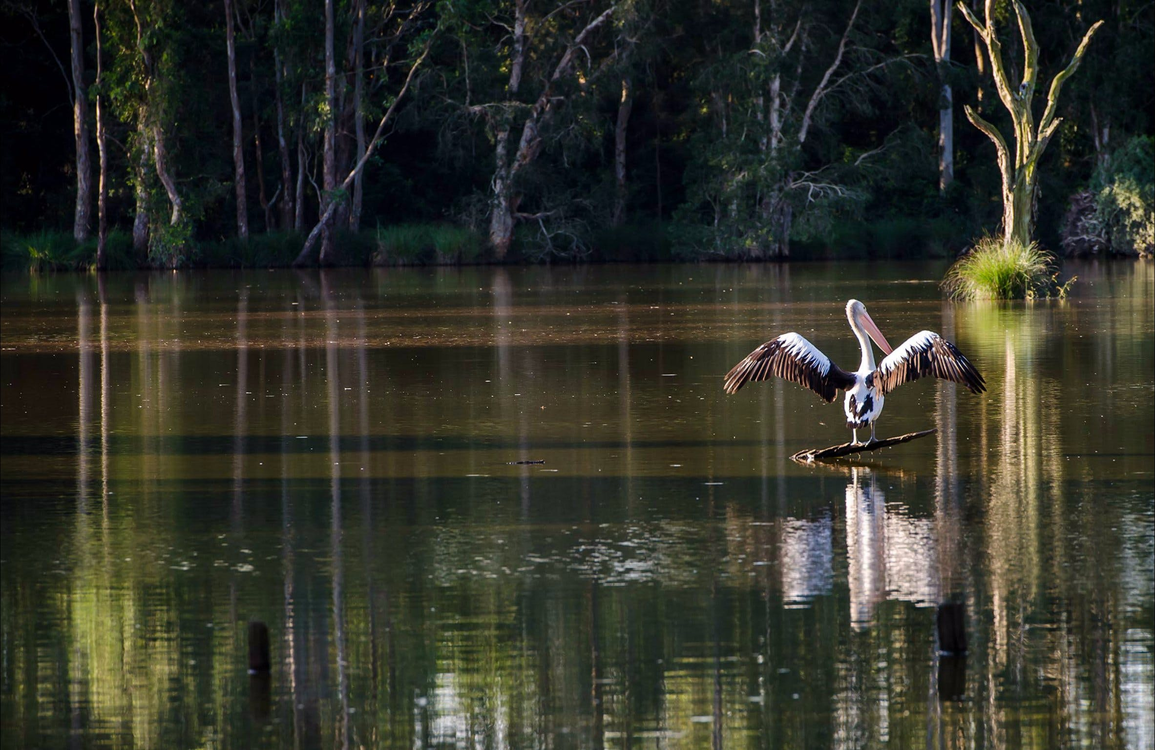 Seaham Swamp Nature Reserve - Tourism Brisbane