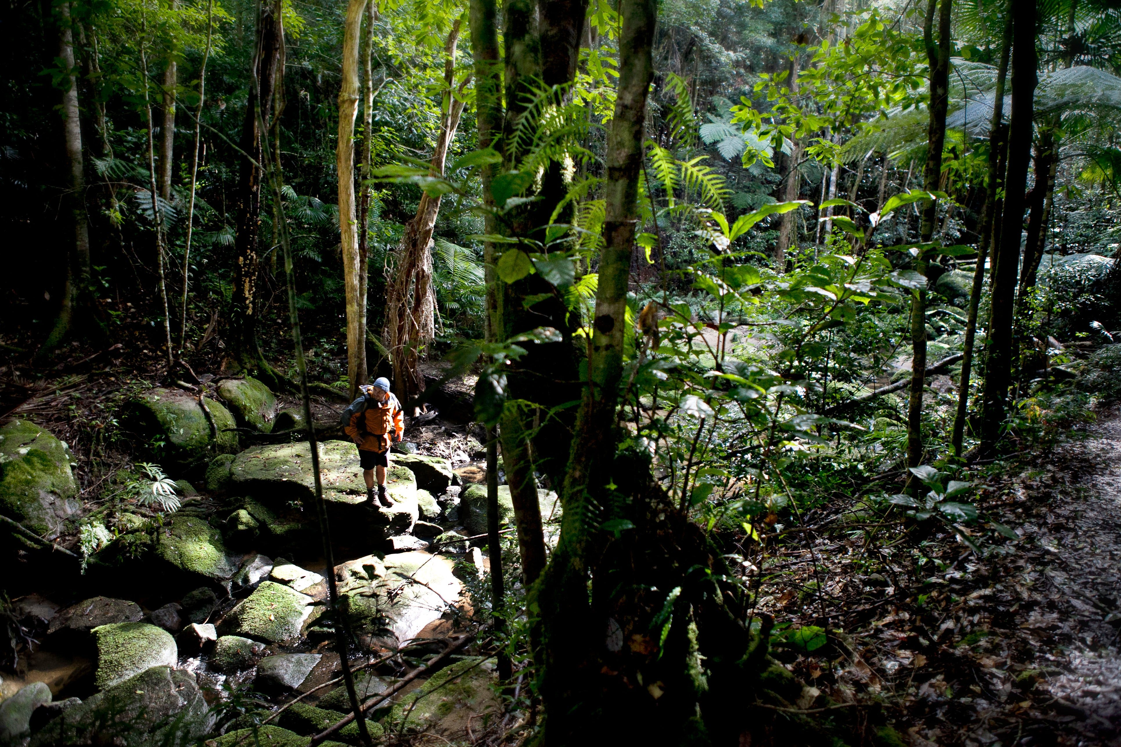 Strickland State Forest - Tourism Brisbane