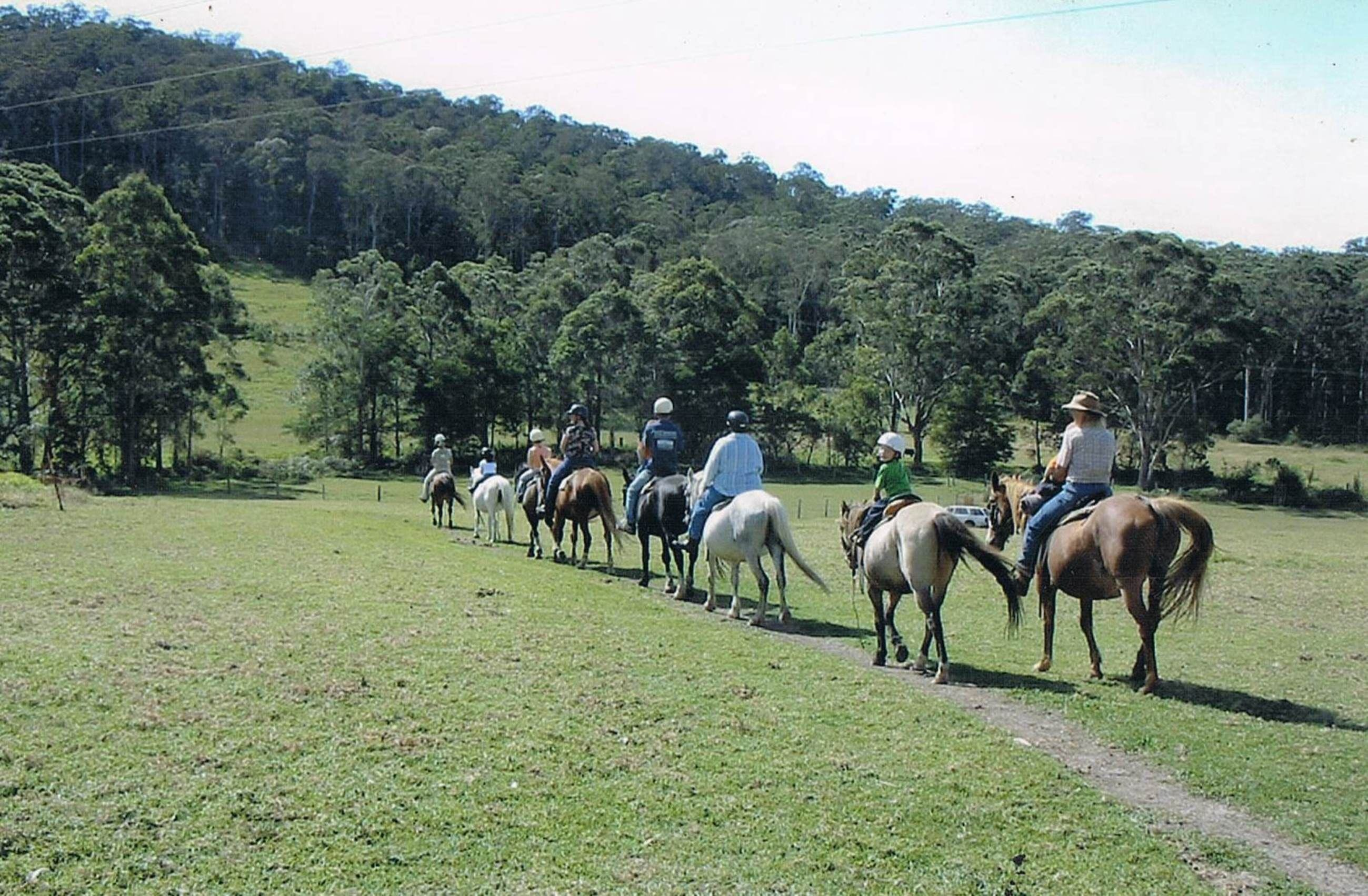 Timbertops - Horse Riding - Tourism Brisbane