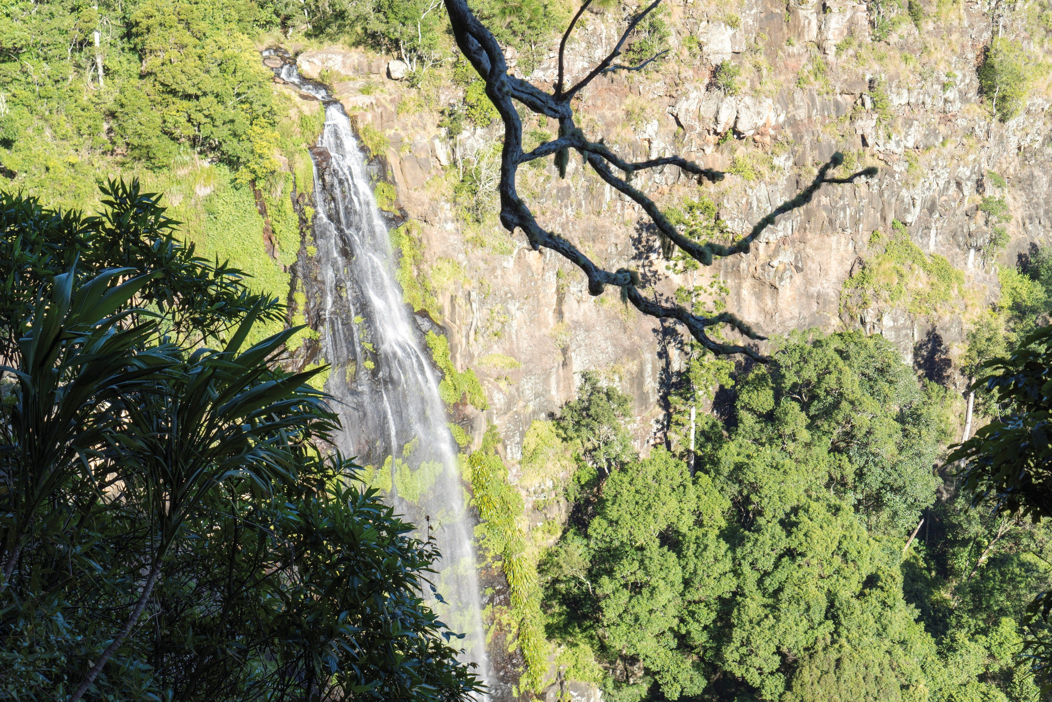 Morans Falls track Lamington National Park - Tourism Brisbane