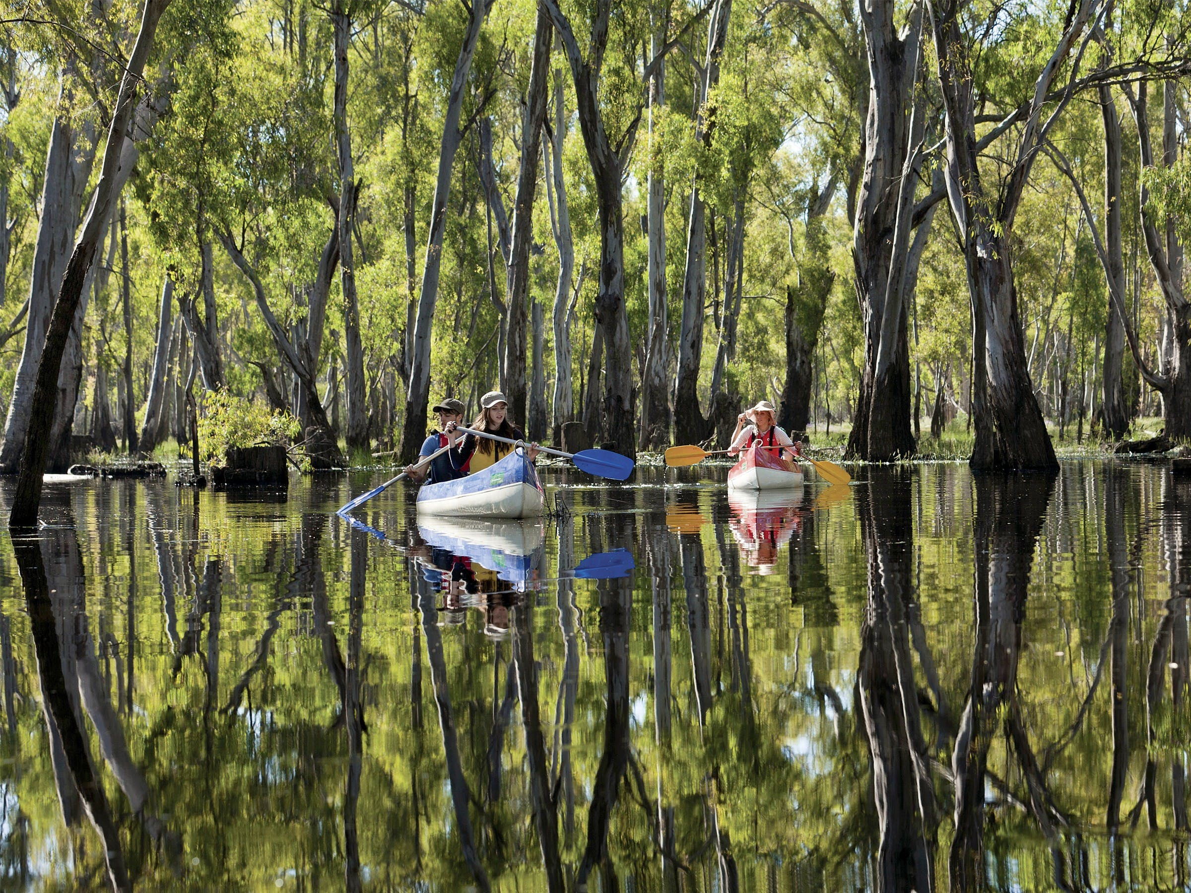 Murray River canoe trails - Tourism Brisbane