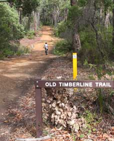 Old Timberline and Sidings Rail Trails - Tourism Brisbane