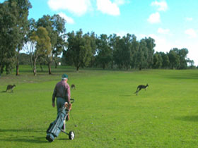 Coffin Bay Golf Club - Tourism Brisbane