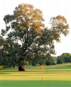 Cowra Golf Club - Tourism Brisbane