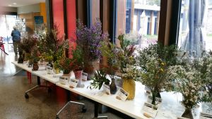 Grampians Wildflower Show - Tourism Brisbane