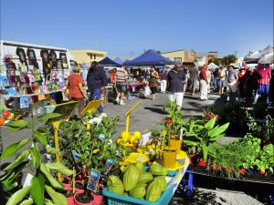 Maclean Community Monthly Markets - Tourism Brisbane