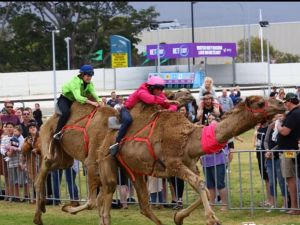 Camel Races at Gosford Showgrounds - Tourism Brisbane