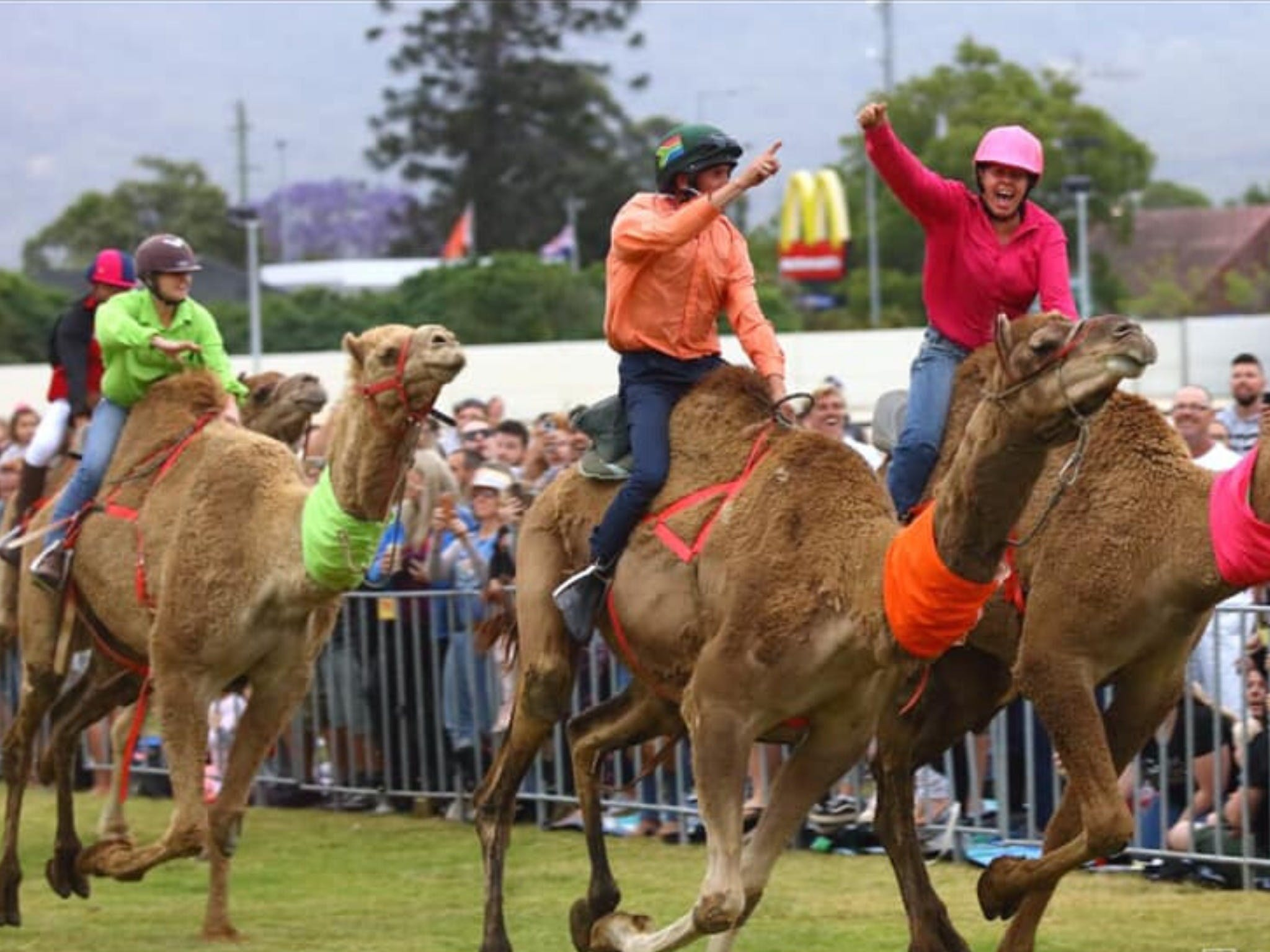 Camel Races at Penrith Paceway - Tourism Brisbane